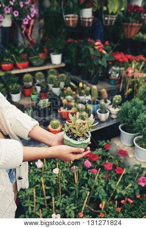 Female hands with succulent in flowerpot in orangery