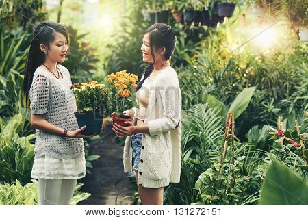 Young Asian women chatting when choosing flowers in orangery