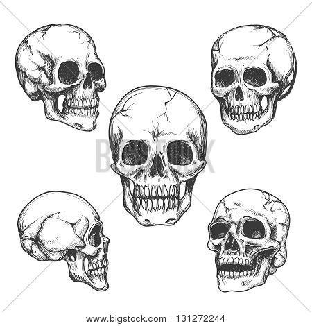Hand drawn skulls. Skull vector Illustrations set