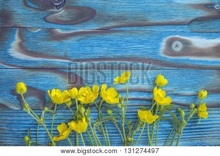 Spring ranunculus, buttercup. Yellow wild ranunculus flowers, close-up photo on the wooden rustic table