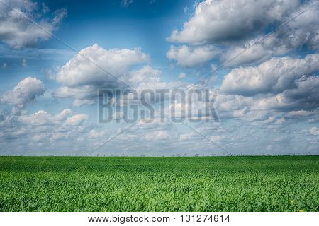 Summer landscape with green grass and blue dramatic sky. HDR photo