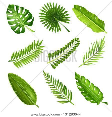 Collection of green decorative elements in realistic style showing different shapes of tropical palm tree branches on white background isolated vector illustration