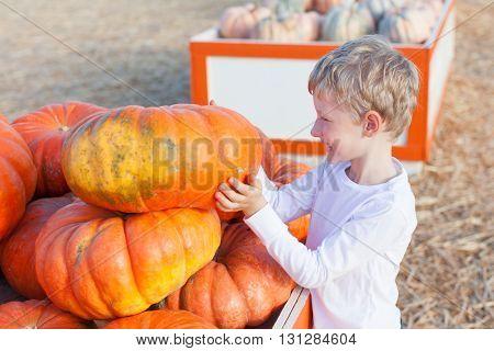 positive cheerful boy enjoying pumpkin patch at fall being playful choosing pumpkin