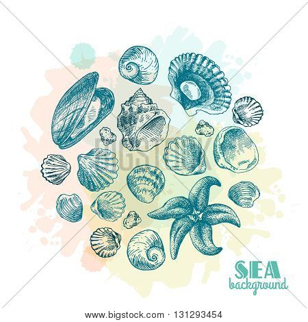 Hand drawn sea shell. Set of vector sketches shells. Shell illustration for your design.