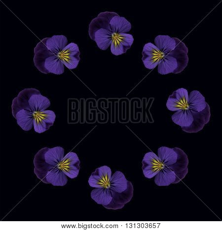 Single pansy repeated to make a circular pattern on black background