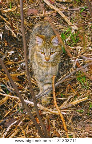Cat hunts and walks. Spring and air.