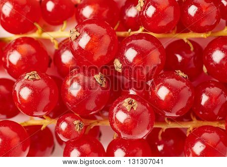 Red ripe Currant berries as texture background top view