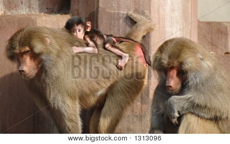 Monky Family