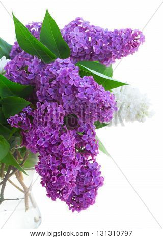 Posy of fresh lilac flowers in vase close up isolated on white background