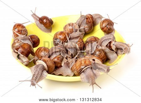 live snails on a plate on the white background.