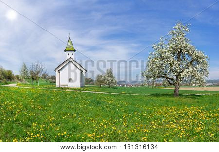 Oberhofen Chapel Orsingen, Germany in spring with blooming pear tree and a meadow with yellow dandelion
