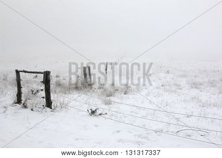 Image of the pastures in the winter and fog
