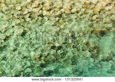 Crystal clear water with rocks on beach in Dominica 3