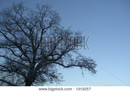 Ice tree color