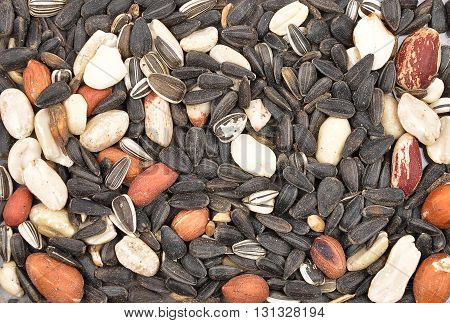 Colorful and crisp image of bird seed