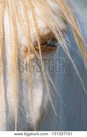 A portrait of a horse. Taken in Kentucky.