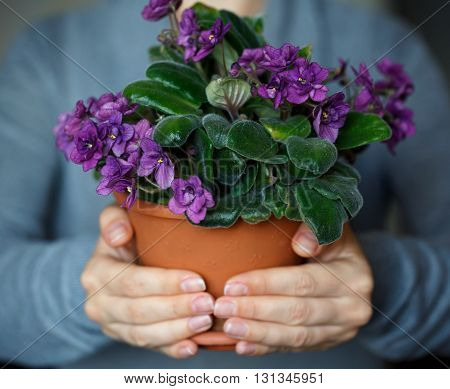 Woman holding a pot of blooming violet