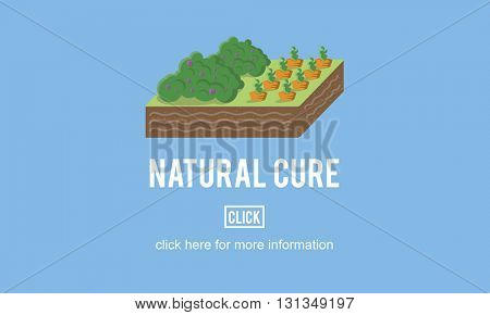 Organic Agriculture Crop Environment Growing Concept