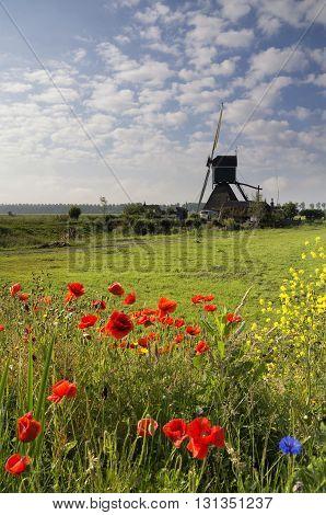 Fieldflowers in front of the Wingerdse mill near Oud-Alblas in the Dutch region Alblasserwaard