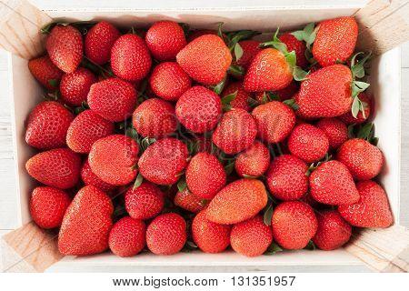 Fresh Strawberries Crop