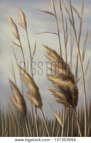 Reed against the sky illustration graphic  landscape