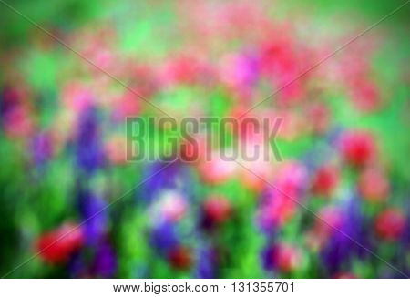 Abstract blurry image of a field with spring flowers