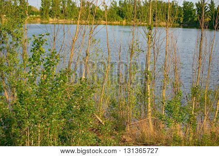 Green trees by the lake on a sunny day in Germany