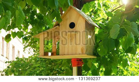 Birdhouse hanging in a tree during summer in city
