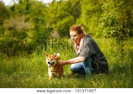 Girl stroking dogs Shiba Inu in Spring Park. Walking with a pet. Pedigree dog. Dog walking.