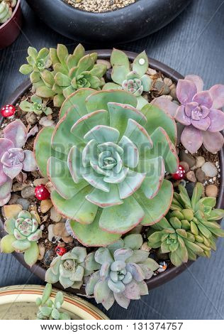 Miniature succulent plants in a planter