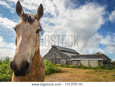 A Brown Horse Stands In Front Of His Barn
