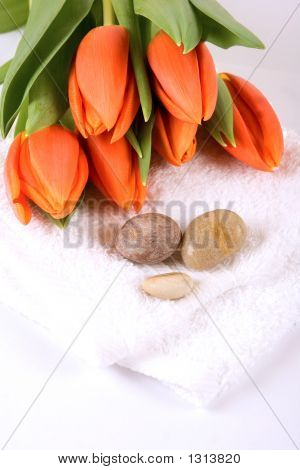 Tulips And Spa
