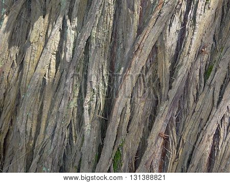 gray tree bark with unique drawings, close-up