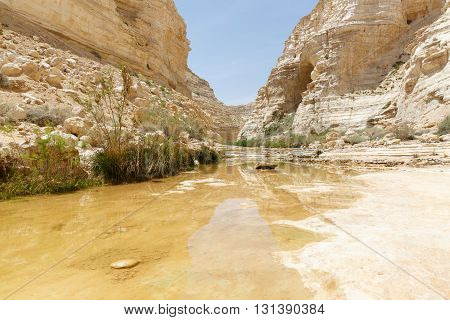 Creek In Canyon Ein Avdat