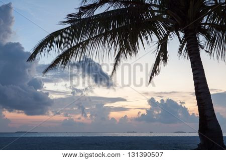 palm tree silhouette on sunset tropical beach, cloudy sky on Maldives