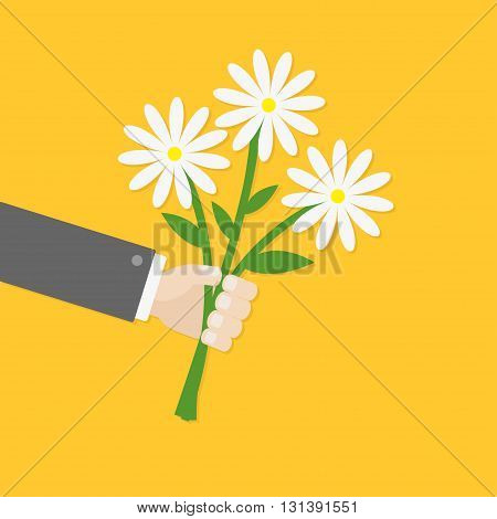 Businessman hand holding bunch bouquet of white daisy flowers. Greeting card. Yellow background. Flat material design. Vector illustration