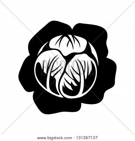 Cabbage head ( shade picture ) on white background