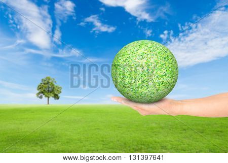 hand holding green grass ball on green grass field with tree and blue sky backgroundused for green earth concept