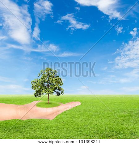 Green Earth concepthand holding tree against green field and blue sky background