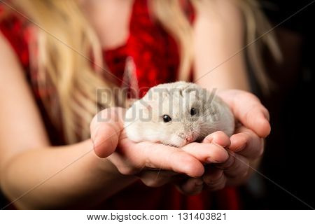 Little girls with a small gray dwarf hamster in her hand