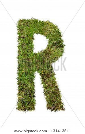 fresh green grass letter on white background - R