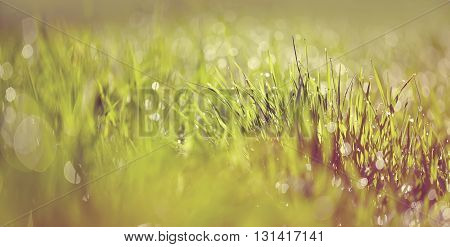 Abstract with bokeh Blurred background with a wet grass