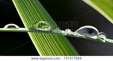 Close up of big rain drops on plam leaf