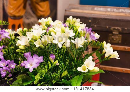 Vibrant flower close-up bouquet of pink and white alstroemeria background still-life with vintage background