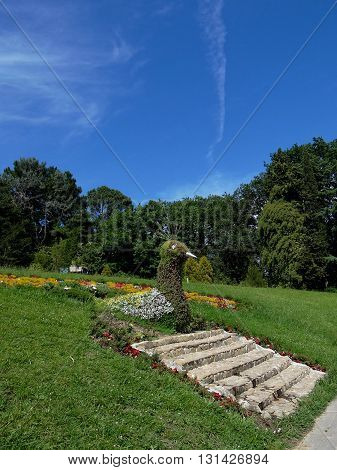 beautiful flowerbed in a Park made in the form of a bird, Sochi