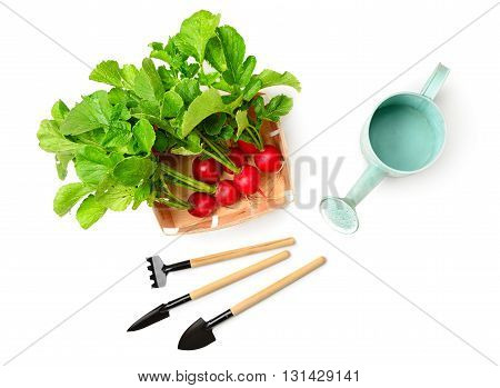 radishes in a basket and gardening tools isolated on white background