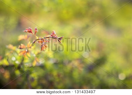 Beautiful nature leaf background with copy space