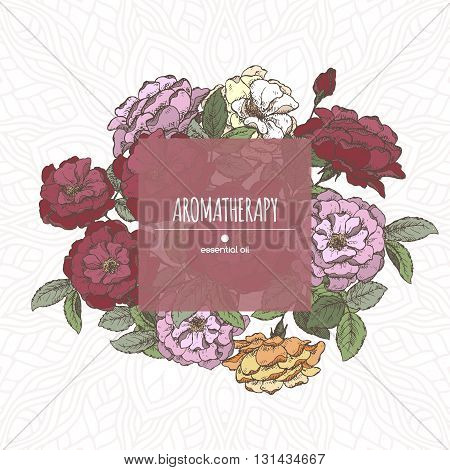 Romantic center frame template with Damask roses sketch. Aromatherapy series. Great for greeting card design, perfume design, cooking or gardening.