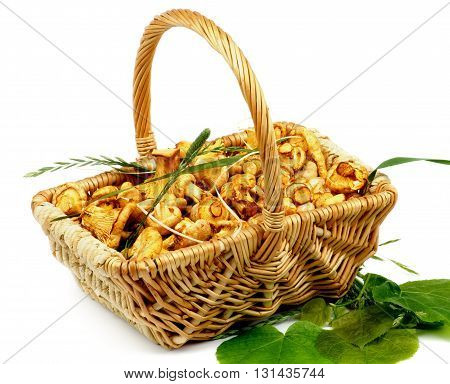 Perfect Little Raw Chanterelles in Wicker Basket with Green Leafs and Grass isolated on White background