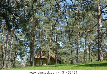 House In Coniferous Forest